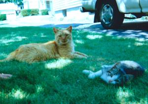 photograph of a cat and a kitten on a suburban lawn