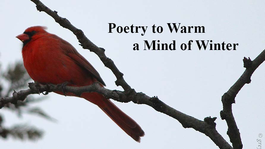 Poetry to Warm a Mind of Winter: Photograph of a Cardinal on a Branch. Photo credit: James H via Flickr, Creative Commons License 2.0.